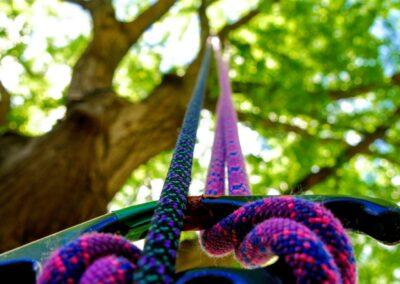 Corso base di tree climbing
